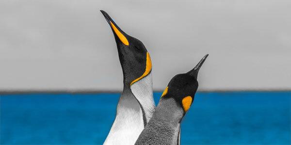 Verandering omarmen met Pinguins